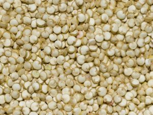 Wholesale Seeds and Grains